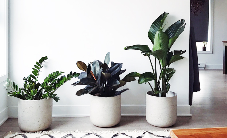 Air Purifying Home Office Plants